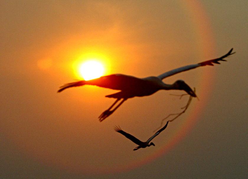 Les migrateurs de notre terre Bird-migration