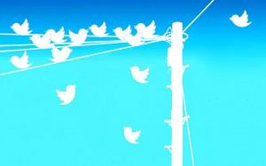 twitter tweet birds phone pole line