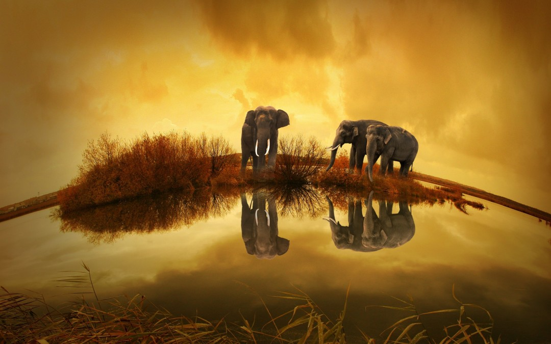 Wikibon analyst says Hadoop pessimism is part of natural adoption cycle