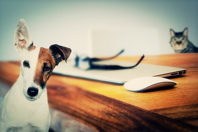 Automating pet care: Smart homes are the new dogsitters