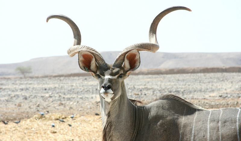 Kudu: How Cloudera wants to save Hadoop by killing it
