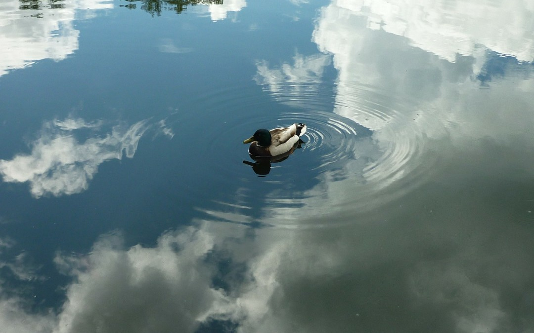 "JP Morgan warns of ""major ripple effect"" as cloud adoption accelerates"
