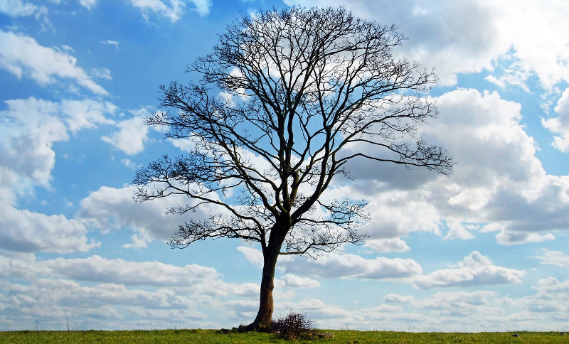 What you missed in Cloud: Branching out