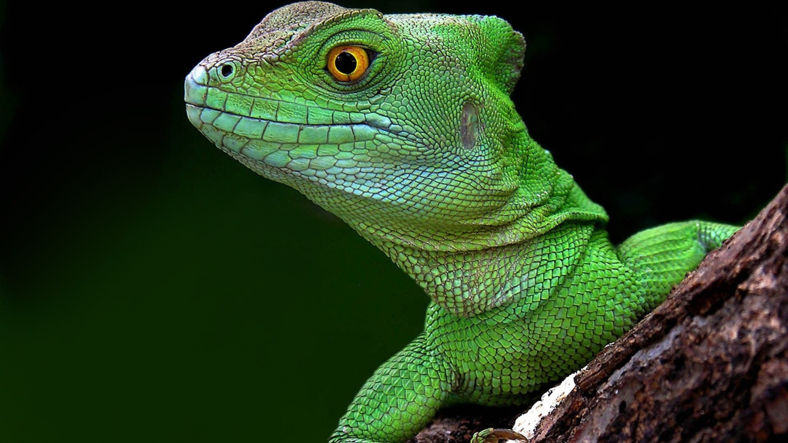 Lizard Squad DDoS-for-hire website compromised, stored